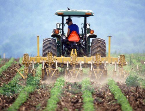 Solar for Farmers: Is Agricultural Solar a Good Idea?