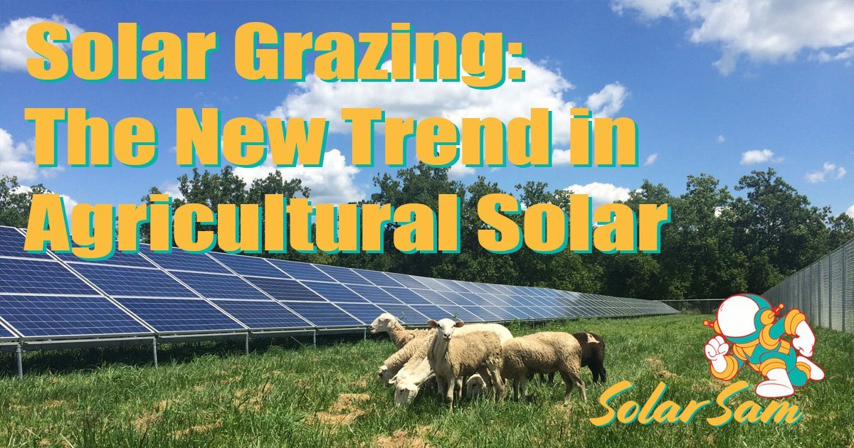 Solar Grazing is an Awesome Trend in Agricultural Solar Get Professional Solar Panel Installation on your Farm by Solar Sam Missouri Illinois