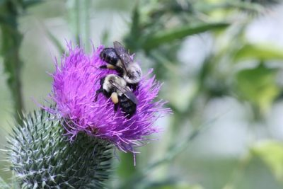 Solar Pollinator Plant Habitats Food for Bees that is Safe for Solar Panels with Professional Installation by Solar Sam