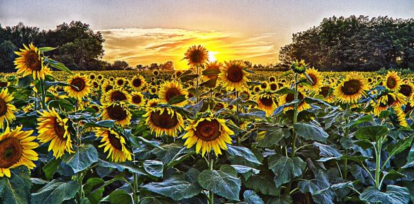 Solar in Kansas Solar Incentives in The Sunflower State are Getting Sunnier Call Solar Sam for Details